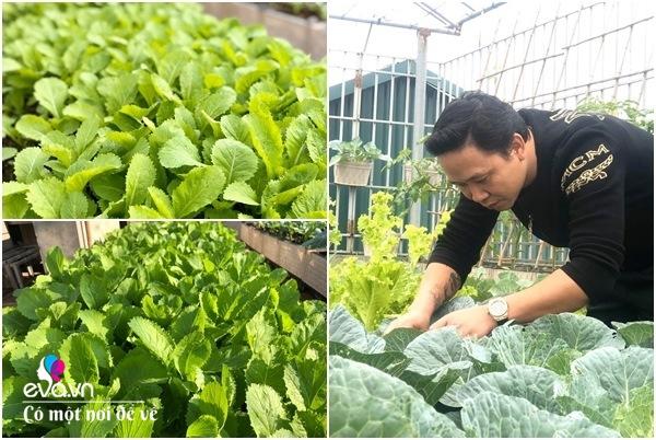 Bố Hà Nội vác 5 tấn đất lên sân thượng trồng rau, phun amp;#34;nước thầnamp;#34; cây tốt ngồn ngộn - 18