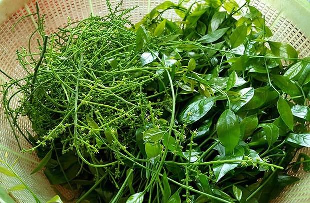 6 loại rau rừng ở Việt Nam giá đắt vẫn được lùng tìm, có tiền chưa chắc đã mua được - 11