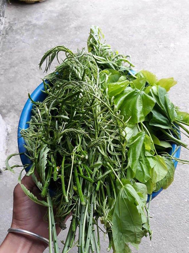 6 loại rau rừng ở Việt Nam giá đắt vẫn được lùng tìm, có tiền chưa chắc đã mua được - 3