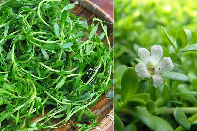 6 loại rau rừng ở Việt Nam giá đắt vẫn được lùng tìm, có tiền chưa chắc đã mua được - 13
