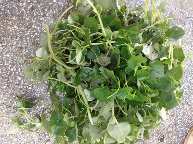 6 loại rau rừng ở Việt Nam giá đắt vẫn được lùng tìm, có tiền chưa chắc đã mua được - 6