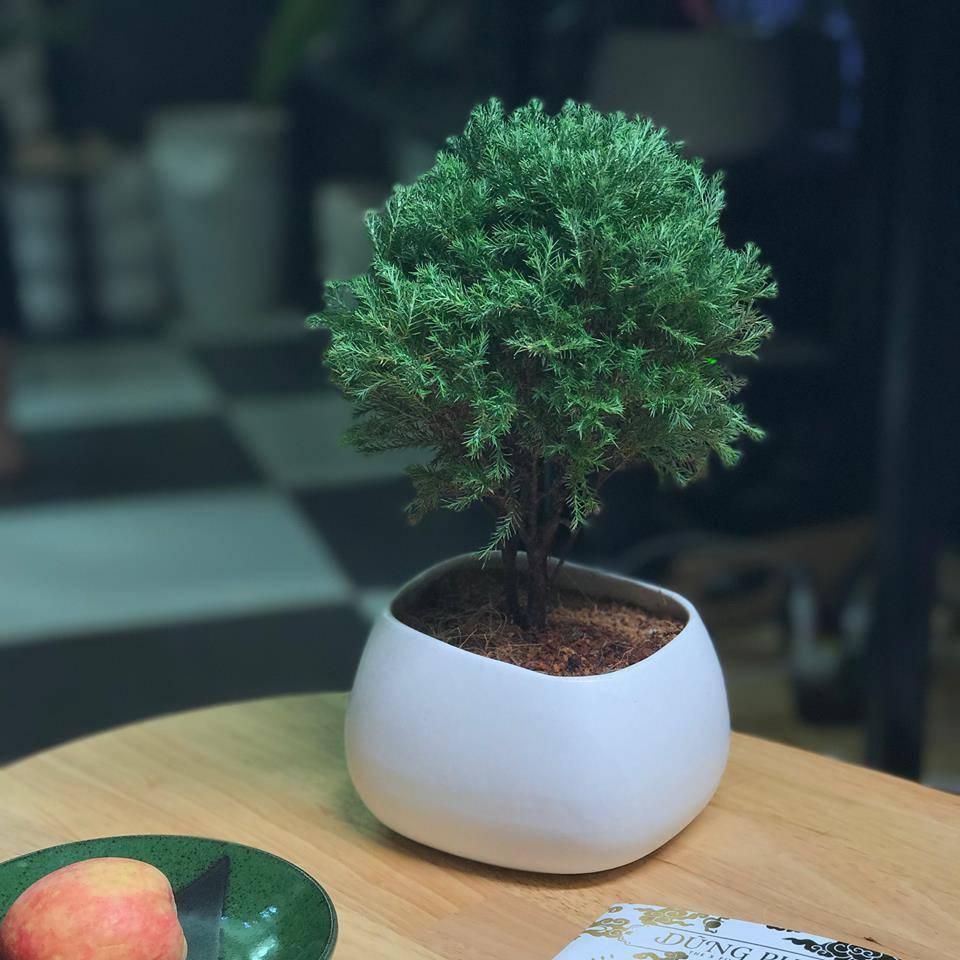 Những loại cây trừ tà khí, nên trồng trong nhà để tài vận kéo đến - ảnh 4