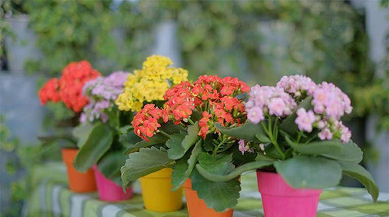 Những loại cây trừ tà khí, nên trồng trong nhà để tài vận kéo đến - ảnh 6