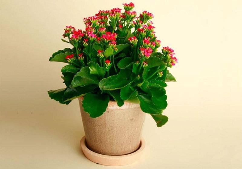 Những loại cây trừ tà khí, nên trồng trong nhà để tài vận kéo đến - ảnh 7