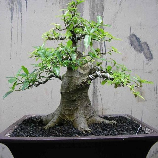 Những loại cây trừ tà khí, nên trồng trong nhà để tài vận kéo đến - ảnh 9