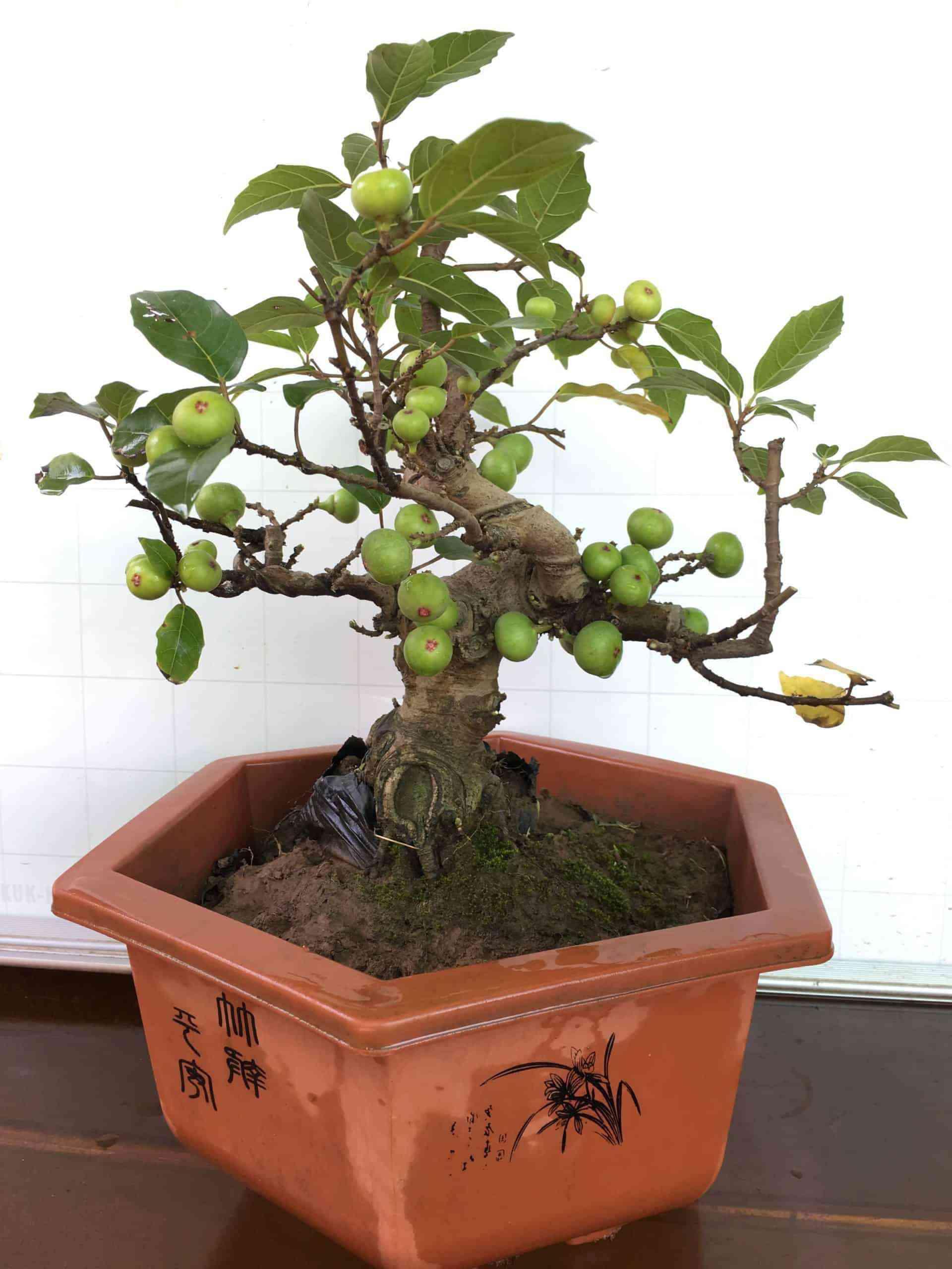 Những loại cây trừ tà khí, nên trồng trong nhà để tài vận kéo đến - ảnh 8