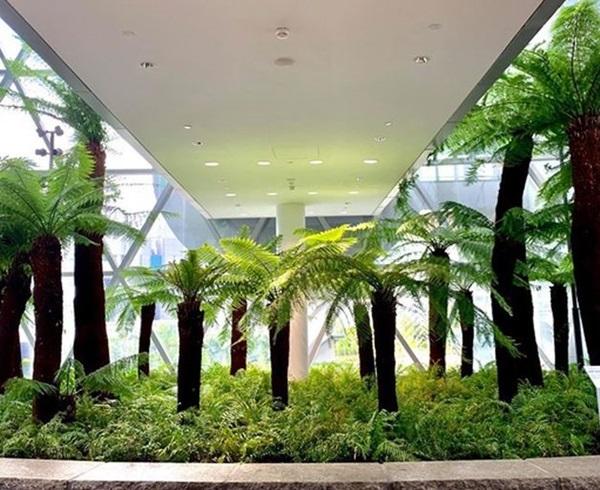 Cây dương xỉ có đặc điểm gì, ý nghĩa, tác dụng và cách trồng