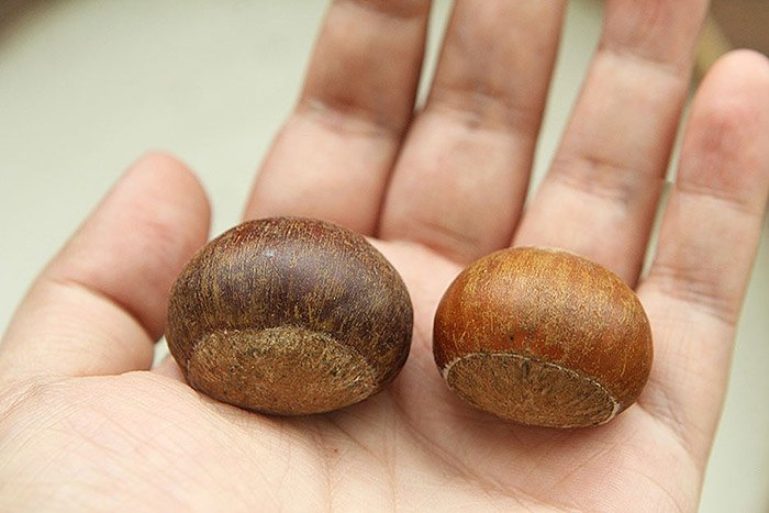 Mua hạt dẻ, chọn hạt cái mới thơm bùi ngọt, hạt đực ít thịt lại kém ngon-4