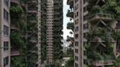 """Thành phố """"rừng thẳng đứng"""" độc đáo ở Trung Quốc hóa """"thành phố ma"""""""