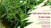 Những loại rau kỳ lạ có giá đắt như thịt cá ở Việt Nam