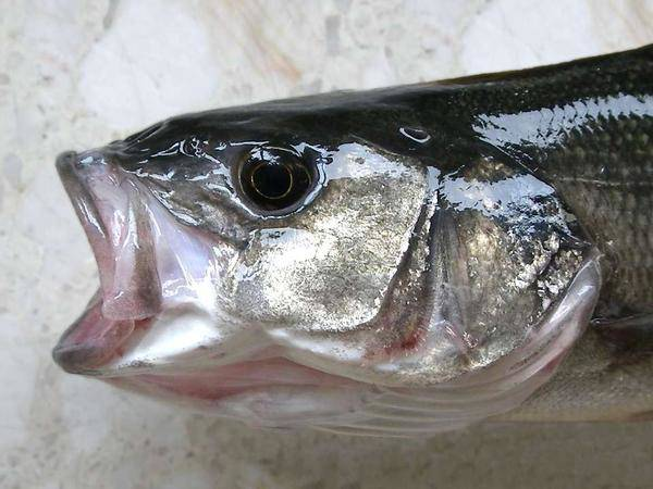 Ăn cá giúp trẻ thông minh nhưng 3 loại cá này nếu ăn nhiều dễ hỏng não lại ung thư - 4