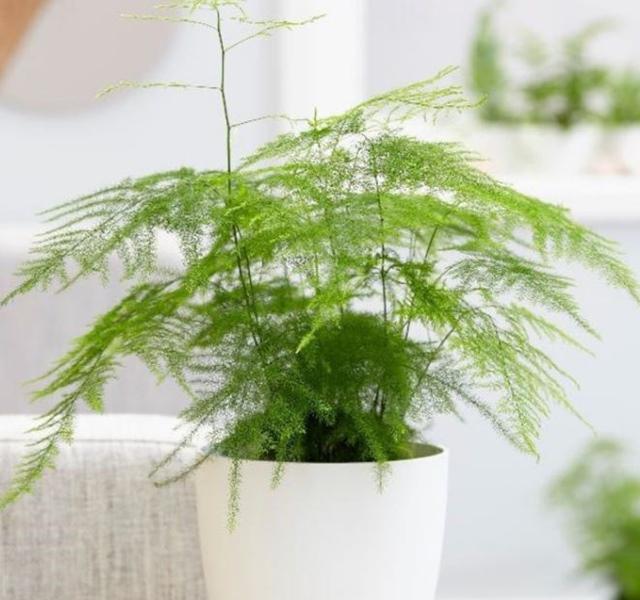 Các mẫu cây cảnh để bàn đẹp, hợp tuổi, hợp mệnh phong thủy - 25