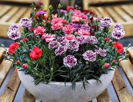3 loài hoa thịnh vượng, điềm lành và sung túc trồng trong nhà không phải ai cũng biết - 6