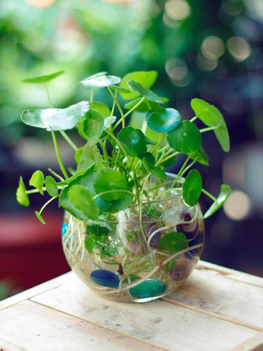 3 loài hoa thịnh vượng, điềm lành và sung túc trồng trong nhà không phải ai cũng biết - 5