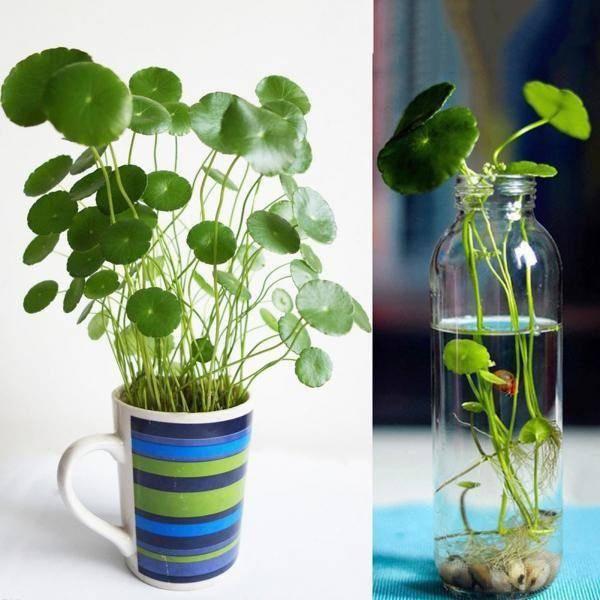 3 loài hoa thịnh vượng, điềm lành và sung túc trồng trong nhà không phải ai cũng biết - 4