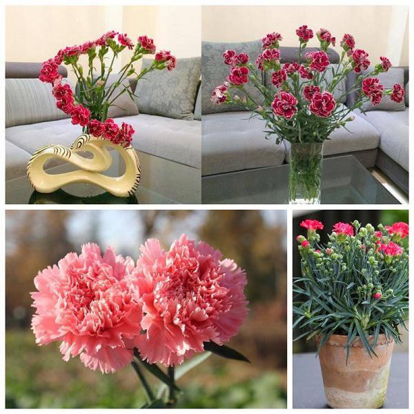 3 loài hoa thịnh vượng, điềm lành và sung túc trồng trong nhà không phải ai cũng biết - 7