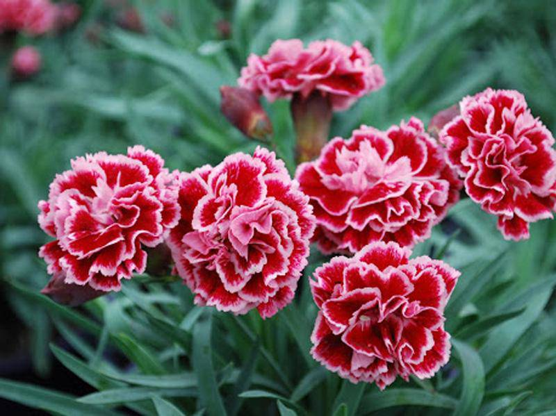 3 loài hoa thịnh vượng, điềm lành và sung túc trồng trong nhà không phải ai cũng biết - 9