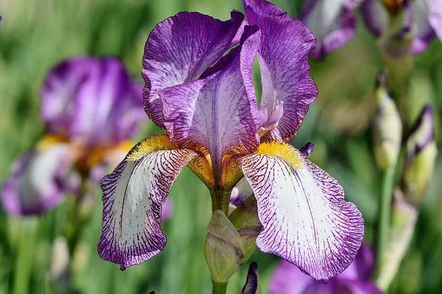 3 loài hoa thịnh vượng, điềm lành và sung túc trồng trong nhà không phải ai cũng biết - 11