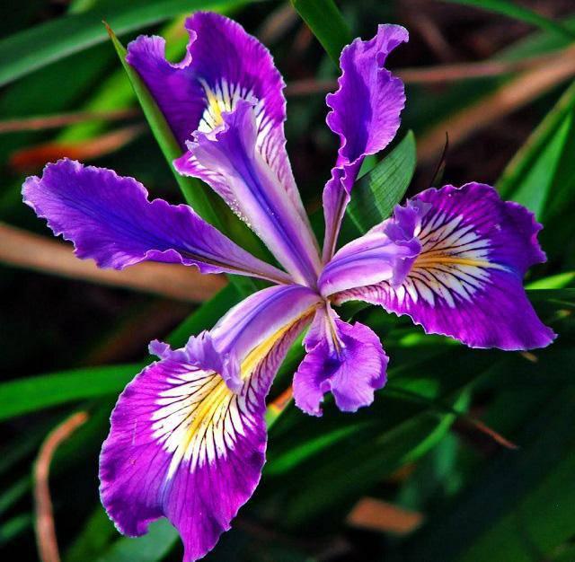 3 loài hoa thịnh vượng, điềm lành và sung túc trồng trong nhà không phải ai cũng biết - 10