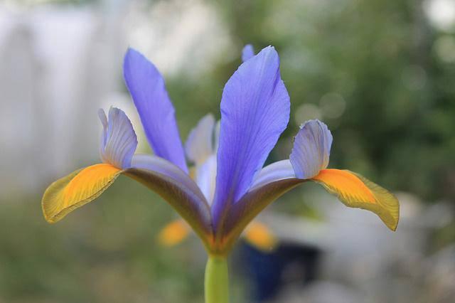 3 loài hoa thịnh vượng, điềm lành và sung túc trồng trong nhà không phải ai cũng biết - 15