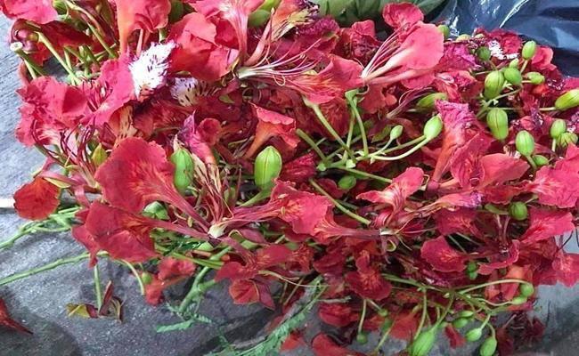 Ở Việt Nam có 5 loại hoa ăn được, giá chỉ vỏn vẹn... 0 đồng - 7