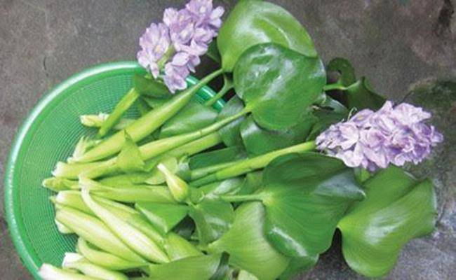 Ở Việt Nam có 5 loại hoa ăn được, giá chỉ vỏn vẹn... 0 đồng - 9