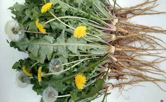 Ở Việt Nam có 5 loại hoa ăn được, giá chỉ vỏn vẹn... 0 đồng - 13