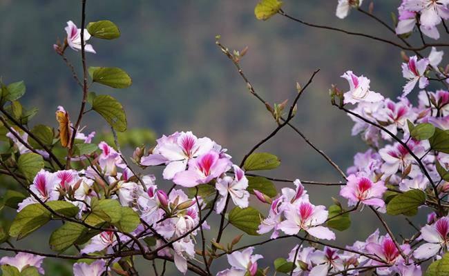 Ở Việt Nam có 5 loại hoa ăn được, giá chỉ vỏn vẹn... 0 đồng - 15