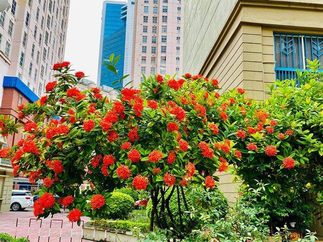 Sao Việt 24h: Vườn cây cảnh tuyệt đẹp trước cửa căn nhà 7 tỷ của nghệ sĩ Quang Tèo - 4