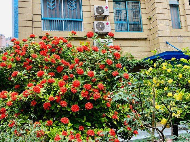 Sao Việt 24h: Vườn cây cảnh tuyệt đẹp trước cửa căn nhà 7 tỷ của nghệ sĩ Quang Tèo - 3