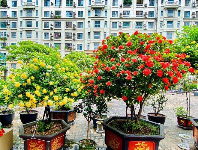 Sao Việt 24h: Vườn cây cảnh tuyệt đẹp trước cửa căn nhà 7 tỷ của nghệ sĩ Quang Tèo - 5