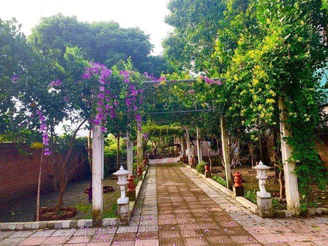 Sao Việt 24h: Vườn cây cảnh tuyệt đẹp trước cửa căn nhà 7 tỷ của nghệ sĩ Quang Tèo - 8