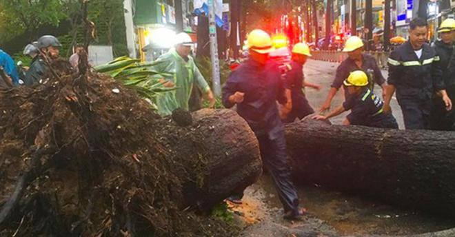 Cây cổ thụ bật gốc trong cơn mưa ở TP.HCM đè người đàn ông đi đường tử vong - 5