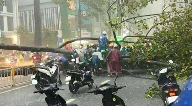 Cây cổ thụ bật gốc trong cơn mưa ở TP.HCM đè người đàn ông đi đường tử vong - 6