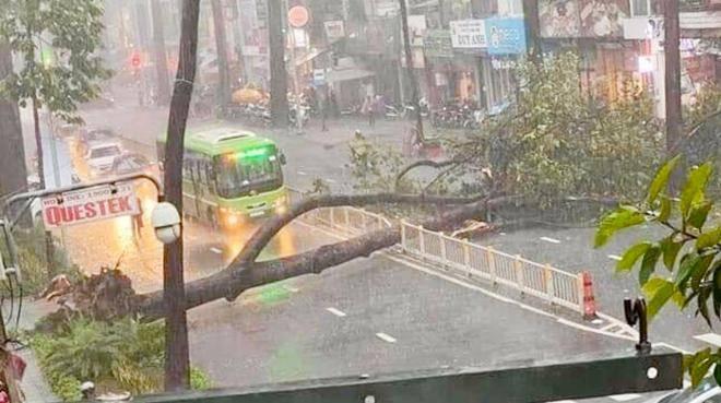 Cây cổ thụ bật gốc trong cơn mưa ở TP.HCM đè người đàn ông đi đường tử vong - 1