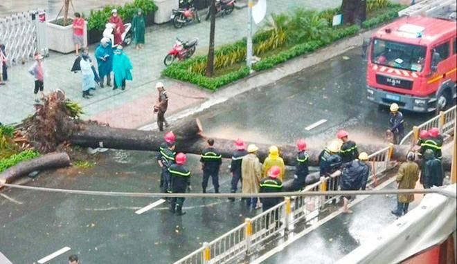 Cây cổ thụ bật gốc trong cơn mưa ở TP.HCM đè người đàn ông đi đường tử vong - 3