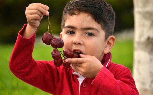 7 loại hoa quả người lớn ăn không sao, trẻ nhỏ ăn nhiều sớm muộn cũng hại người - 7
