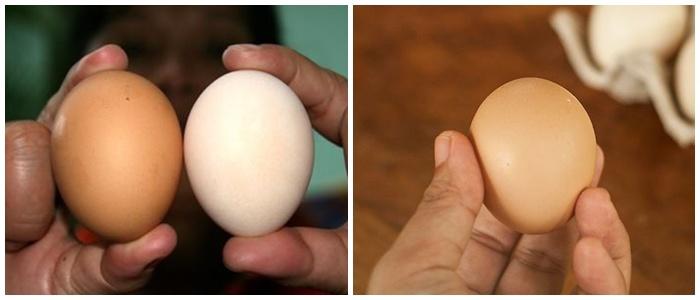 Mua trứng nên chọn quả to hay nhỏ thì ngon, chuyên gia mách sự thật ai cũng bất ngờ - 1