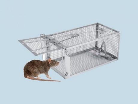 Cách làm bẫy chuột thông minh bằng chai nhựa, thùng sơn đơn giản