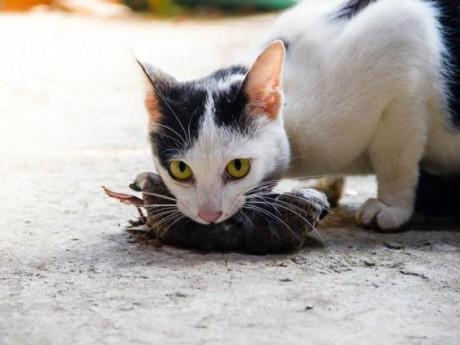 Những cách diệt chuột trong nhà tận gốc vô cùng hiệu quả