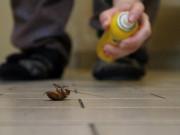 Cách diệt gián trong nhà tận gốc hiệu quả mà an toàn với sức khỏe