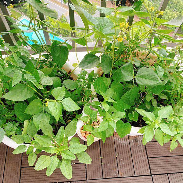 Chuyển lên ở nhà 5,5 tỷ đồng, Huỳnh Hồng Loan làm vườn 6m2, lấy nước vo gạo tưới cây - 10