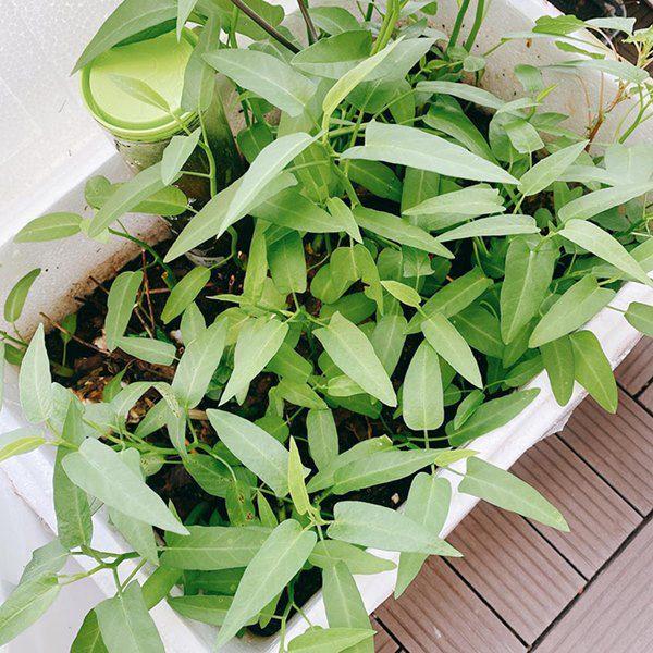 Chuyển lên ở nhà 5,5 tỷ đồng, Huỳnh Hồng Loan làm vườn 6m2, lấy nước vo gạo tưới cây - 11