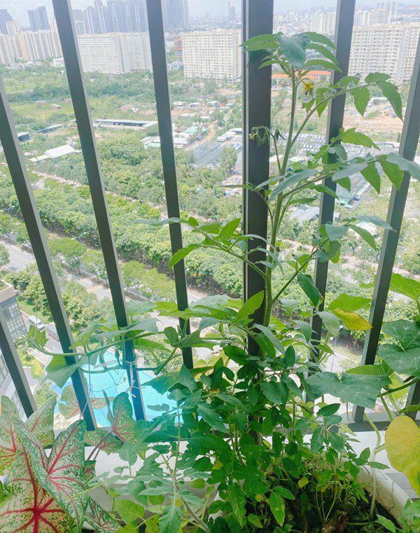 Chuyển lên ở nhà 5,5 tỷ đồng, Huỳnh Hồng Loan làm vườn 6m2, lấy nước vo gạo tưới cây - 13
