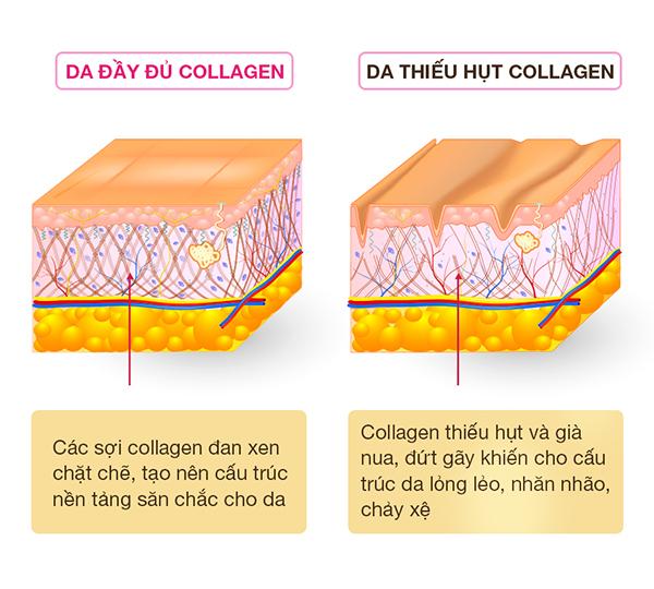Pure Collagen: 4 tác động vượt trội, xuất xứ từ Ý đáp ứng nhu cầu phụ nữ Việt - 3