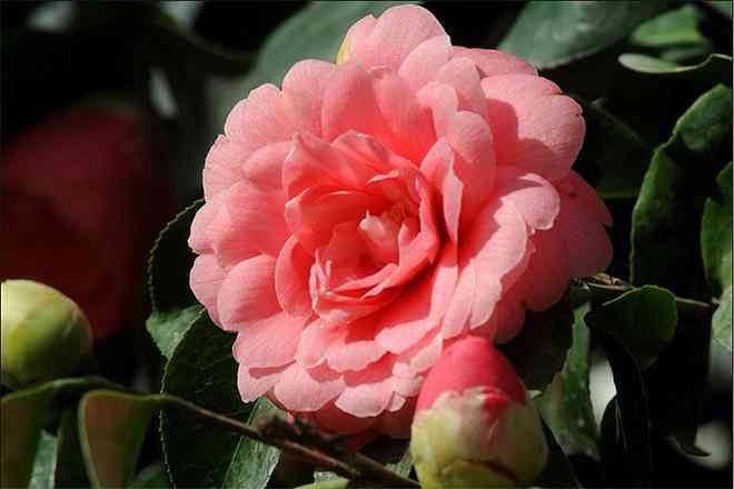 Loài hoa đẹp hiếm có chỉ xuất hiện ở 2 nơi trên thế giới