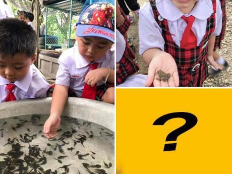 Buổi học về ếch của trẻ nhỏ được dân mạng rần rần chia sẻ vì bức ảnh cuối kinh dị