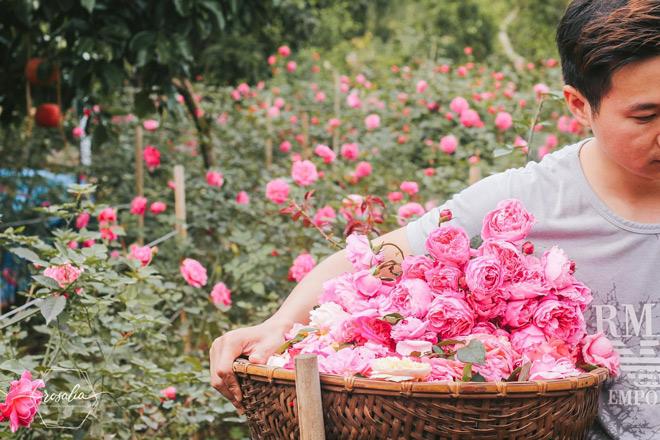 """sao viet """"dua nhau"""" su dung my pham thien nhien tu hoa hong – trao luu lam dep moi - 3"""