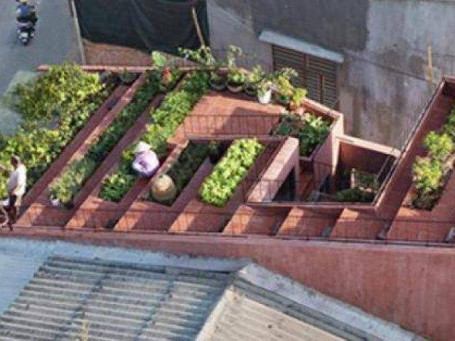 Vườn rau 7 bậc thang trên mái nhà ở Quảng Ngãi lên báo Mỹ