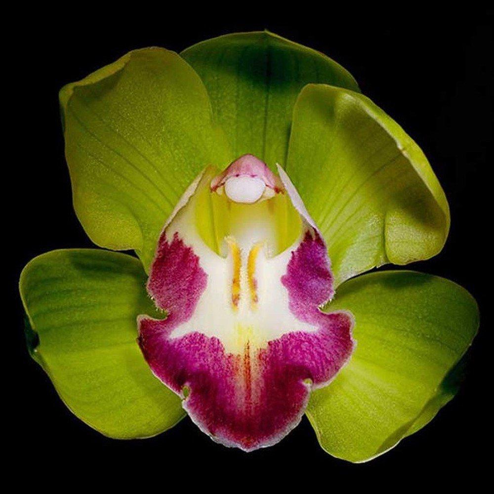 9 loai hoa dat nhat hanh tinh, co loai den vang 9999 cung khong la gi - 10